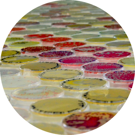 Microbes palette